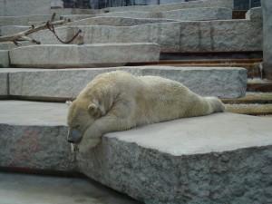 bear, lazy, writer, sleeping