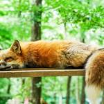 Do You Need Less Sleep as You Age?